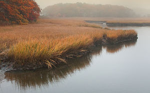 Web_Herring River in Fog-jdimattia_jpg