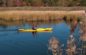 Web_Kayaking Herring River-jdimattia_jpg
