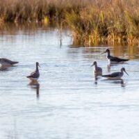 Bells-Neck-bird-walk-by-Gerry-Beetham-19Oct2021-23
