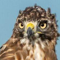 web-Trull-RR-bird-walk-by-Gerry-Beetham-3Sept2021-12