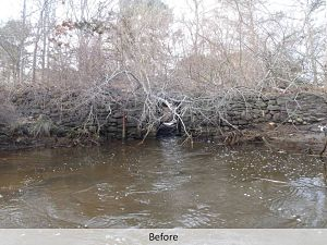 before dam removal web