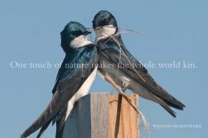 swallow_pair